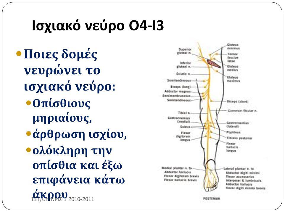 Ισχιακό νεύρο Ο4-Ι3 IST/UH ΝΜΣ 1 2010-2011 Ποιες δομές νευρώνει το ισχιακό νεύρο: Οπίσθιους μηριαίους, άρθρωση ισχίου, ολόκληρη την οπίσθια και έξω επ