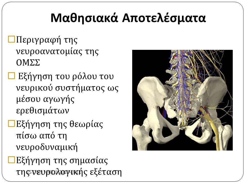 Μαθησιακά Αποτελέσματα IST/UH ΝΜΣ 1 2010-2011  Περιγραφή της νευροανατομίας της ΟΜΣΣ  Εξήγηση του ρόλου του νευρικού συστήματος ως μέσου αγωγής ερεθ