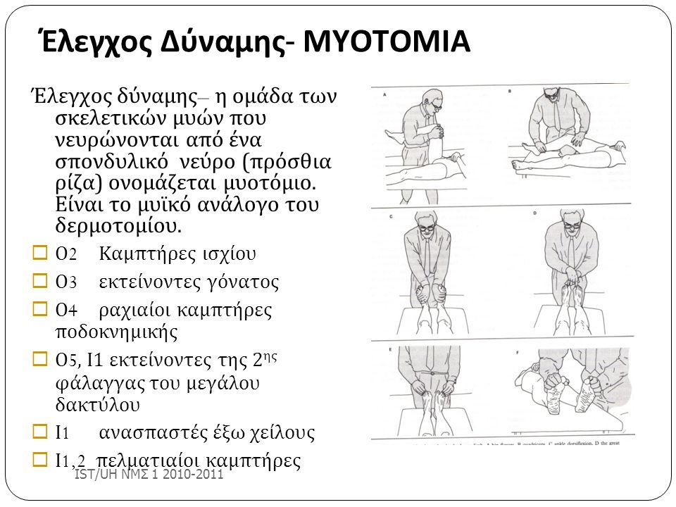 Έλεγχος Δύναμης - ΜΥΟΤΟΜΙΑ IST/UH ΝΜΣ 1 2010-2011 Έλεγχος δύναμης – η ομάδα των σκελετικών μυών που νευρώνονται από ένα σπονδυλικό νεύρο (πρόσθια ρίζα