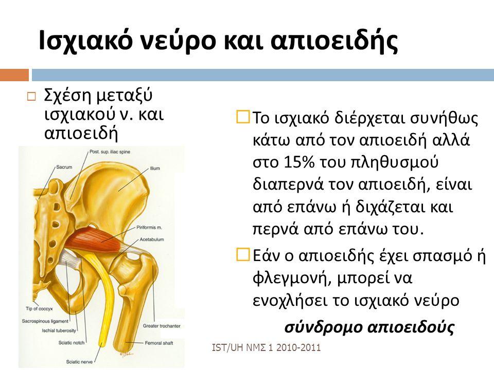Ισχιακό νεύρο και απιοειδής  Σχέση μεταξύ ισχιακού ν.