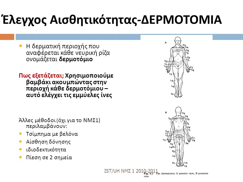 Έλεγχος Αισθητικότητας - ΔΕΡΜΟΤΟΜΙΑ Η δερματική περιοχής που αναφέρεται κάθε νευρική ρίζα ονομάζεται δερμοτόμιο Πως εξετάζεται ; Χρησιμοποιούμε βαμβάκι ακουμπώντας στην περιοχή κάθε δερμοτόμιου – αυτό ελέγχει τις εμμύελες ίνες Άλλες μέθοδοι ( όχι για το ΝΜΣ 1) περιλαμβάνουν : Τσίμπημα με βελόνα Αίσθηση δόνησης ιδιοδεκτικότητα Πίεση σε 2 σημεία IST/UH ΝΜΣ 1 2010-2011