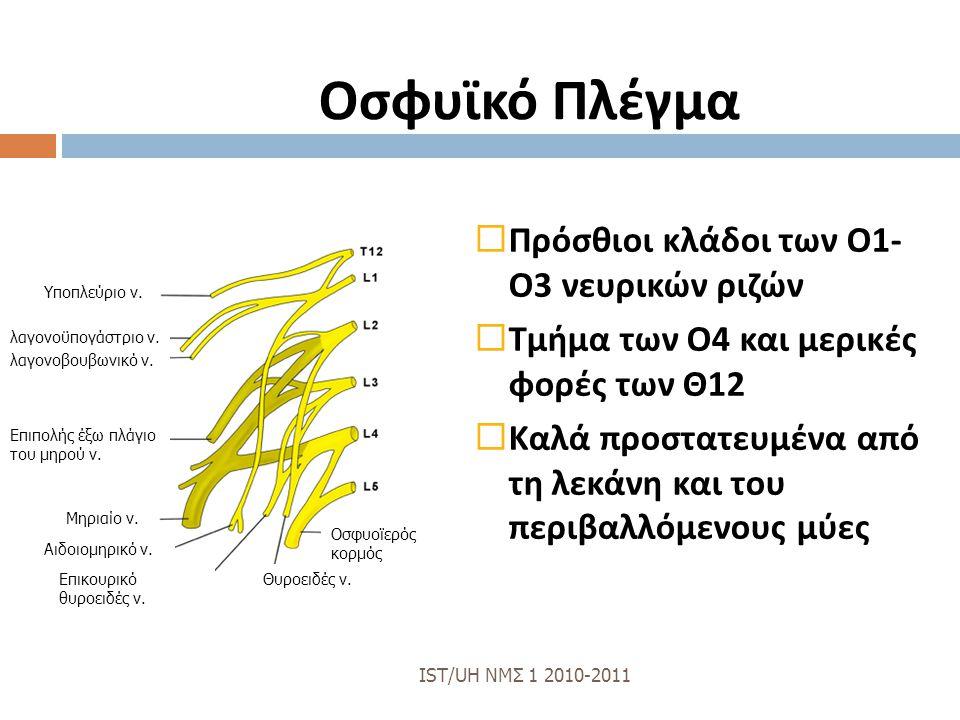 Οσφυϊκό Πλέγμα  Πρόσθιοι κλάδοι των Ο 1- Ο 3 νευρικών ριζών  Τμήμα των Ο 4 και μερικές φορές των Θ 12  Καλά προστατευμένα από τη λεκάνη και του περ