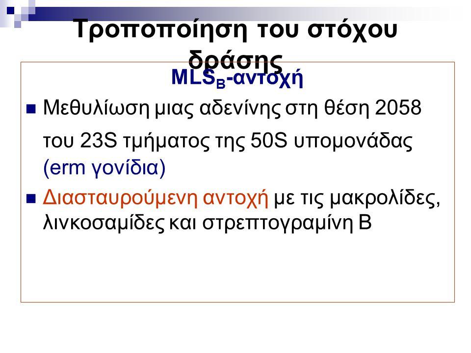 Τροποποίηση του στόχου δράσης MLS B -αντοχή Μεθυλίωση μιας αδενίνης στη θέση 2058 του 23S τμήματος της 50S υπομονάδας (erm γονίδια) Διασταυρούμενη αντ