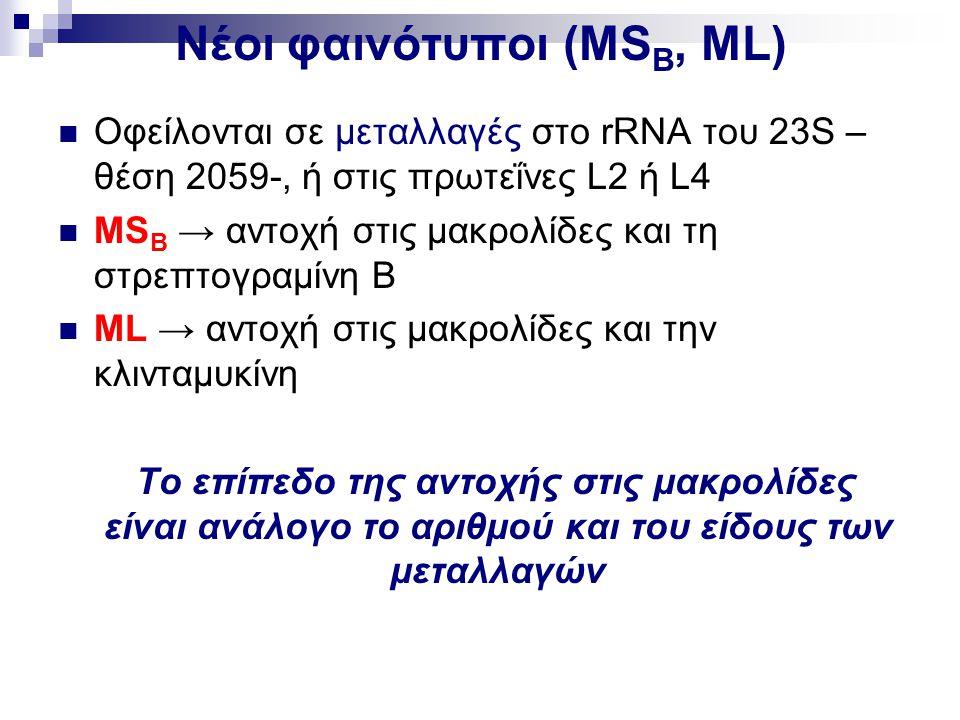 Νέοι φαινότυποι (ΜS B, ML) Οφείλονται σε μεταλλαγές στο rRNA του 23S – θέση 2059-, ή στις πρωτεΐνες L2 ή L4 ΜS B → αντοχή στις μακρολίδες και τη στρεπ