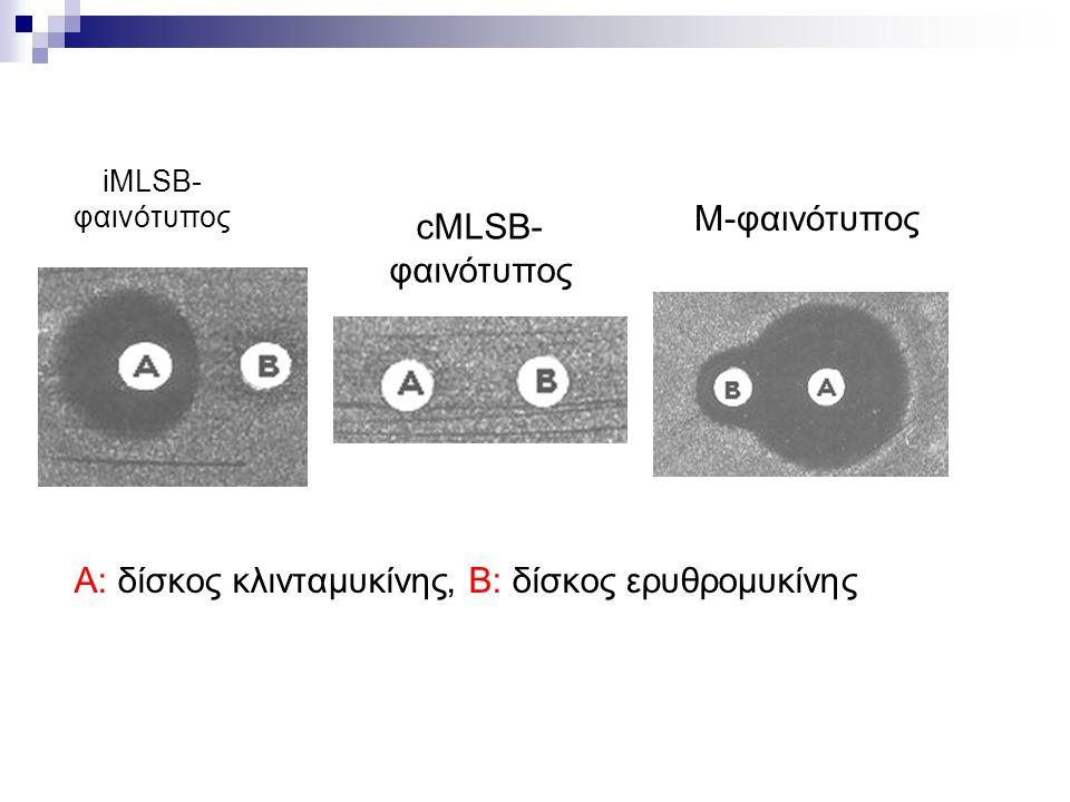 iMLSB- φαινότυπος cMLSB- φαινότυπος M-φαινότυπος A: δίσκος κλινταμυκίνης, Β: δίσκος ερυθρομυκίνης