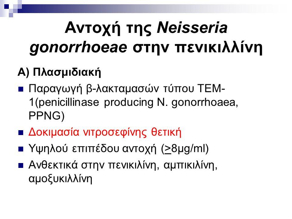 Αντοχή της Neisseria gonorrhoeae στην πενικιλλίνη Α) Πλασμιδιακή Παραγωγή β-λακταμασών τύπου ΤΕΜ- 1(penicillinase producing N. gonorrhoaea, PPNG) Δοκι