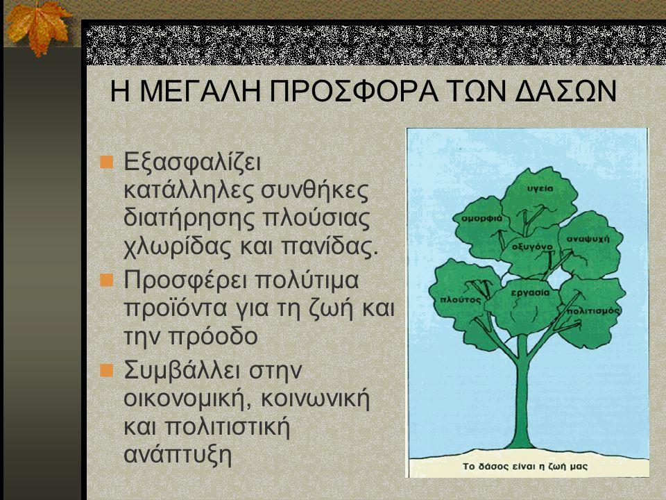 Η ΜΕΓΑΛΗ ΠΡΟΣΦΟΡΑ ΤΩΝ ΔΑΣΩΝ Το δάσος: Προσφέρει ευκαιρίες απασχόλησης, δημιουργίας και ψυχαγωγίας Εμποδίζει την δημιουργία χειμάρρων και πλημμύρων Βοηθά στη σταθεροποίηση του κλίματος απορροφώντας το CO 2