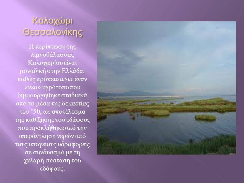 Καλοχώρι Θεσσαλονίκης Η περίπτωση της λιμνοθάλασσας Καλοχωρίου είναι μοναδική στην Ελλάδα, καθώς πρόκειται για έναν « νέο » υγρότοπο που δημιουργήθηκε σταδιακά από τα μέσα της δεκαετίας του '50, ως αποτέλεσμα της καθίζησης του εδάφους που προκλήθηκε από την υπεράντληση νερών από τους υπόγειους υδροφορείς σε συνδυασμό με τη χαλαρή σύσταση του εδάφους.