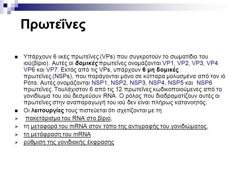 Πρωτεΐνες Υπάρχουν 6 ιικές πρωτεΐνες (VPs) που συγκροτούν το σωματίδιο του ιού(βίριο). Aυτές οι δομικές πρωτεΐνες ονομάζονται VP1, VP2, VP3, VP4, VP6