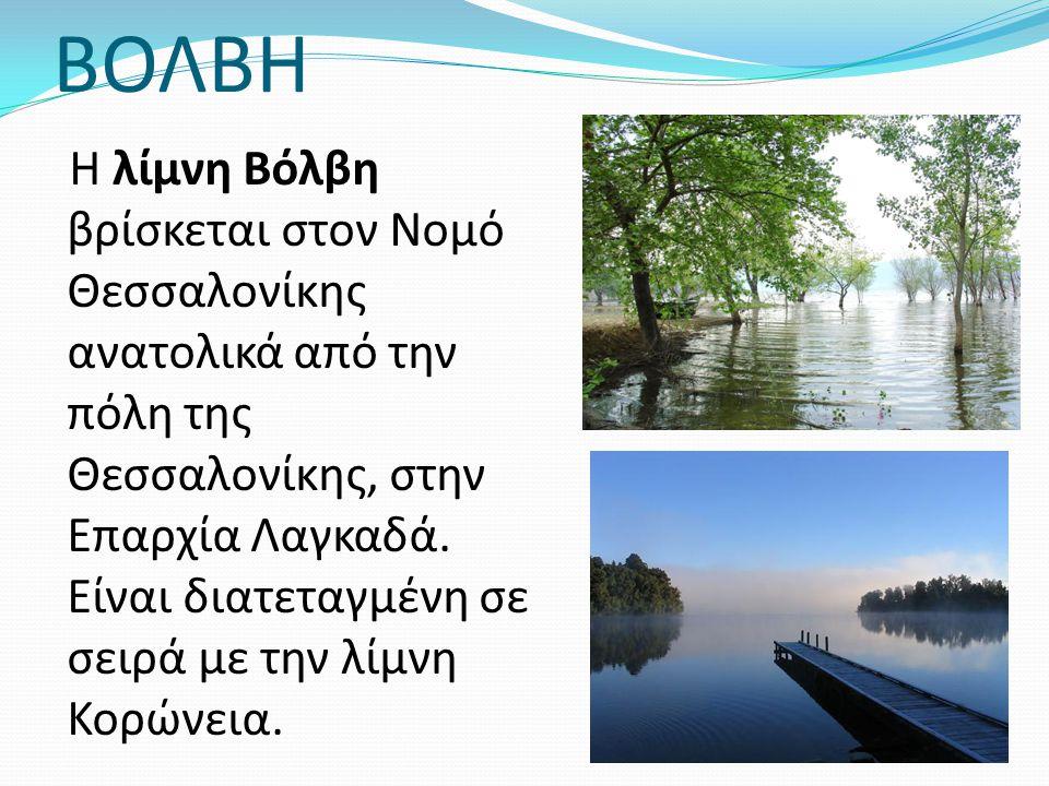 ΒΟΛΒΗ Η λίμνη Βόλβη βρίσκεται στον Νομό Θεσσαλονίκης ανατολικά από την πόλη της Θεσσαλονίκης, στην Επαρχία Λαγκαδά. Είναι διατεταγμένη σε σειρά με την
