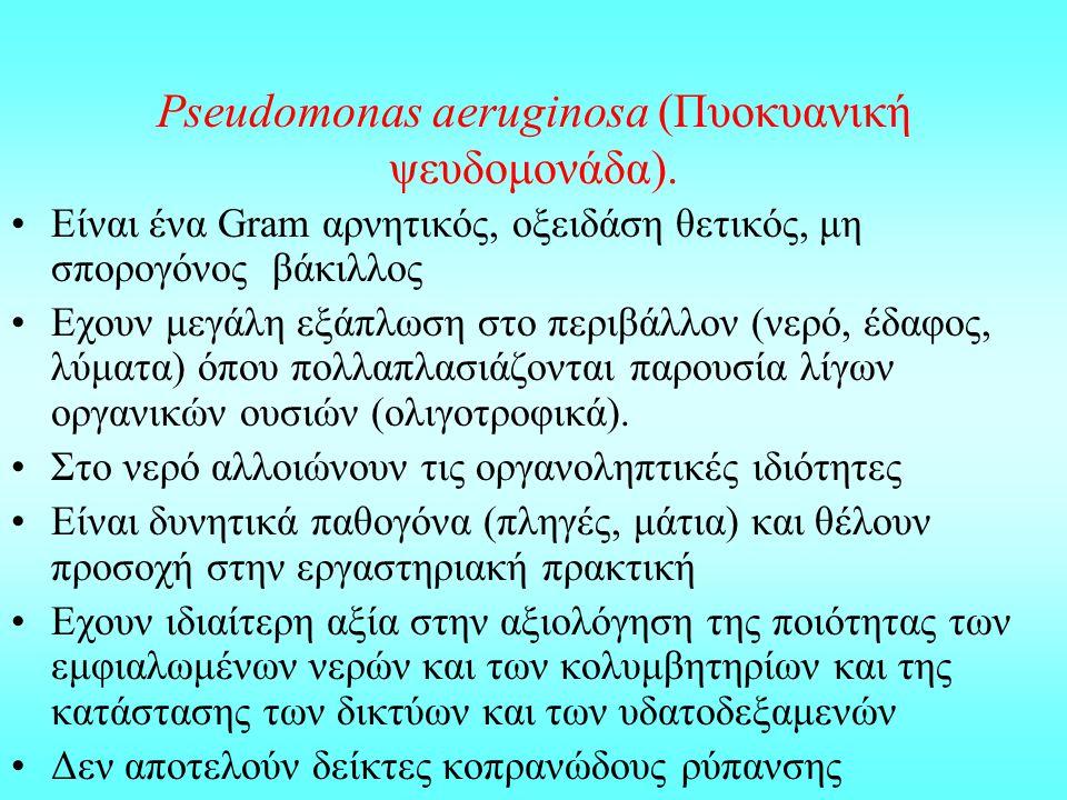 Pseudomonas aeruginosa (Πυοκυανική ψευδομονάδα). Είναι ένα Gram αρνητικός, οξειδάση θετικός, μη σπορογόνος βάκιλλος Εχουν μεγάλη εξάπλωση στο περιβάλλ