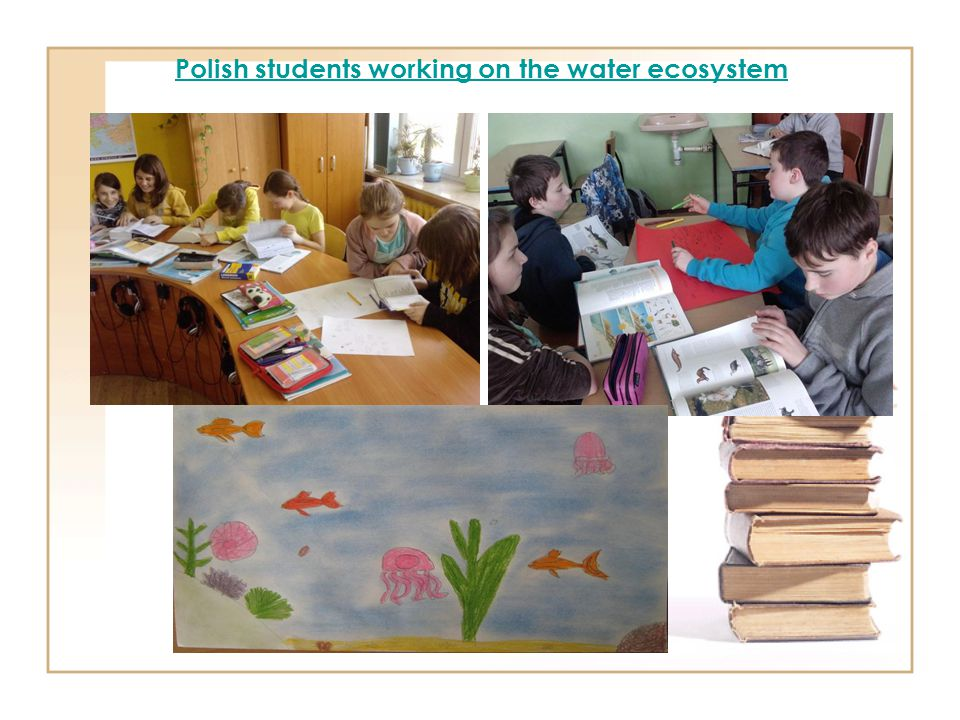 Polish students working on the water ecosystem