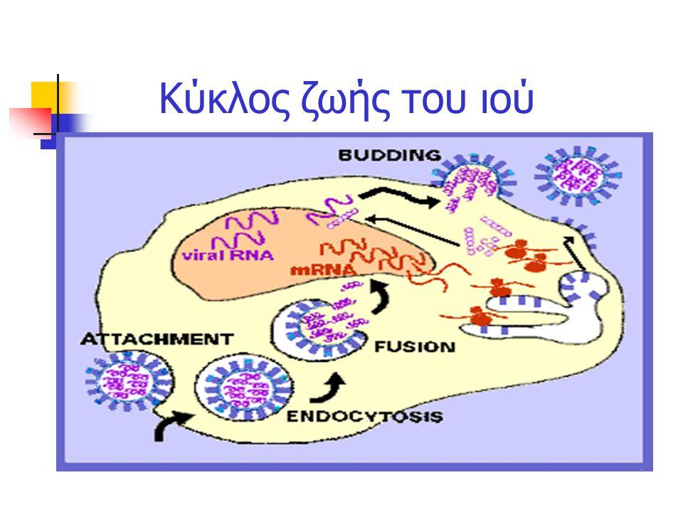 Κύκλος ζωής του ιού