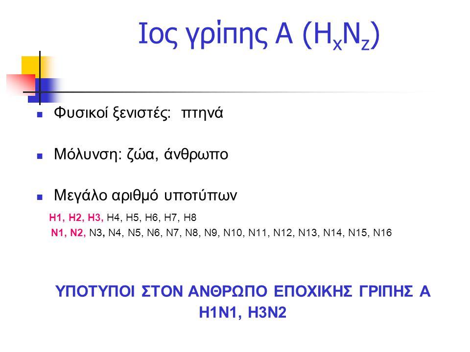 Ιος γρίπης Α (Η x N z ) Φυσικοί ξενιστές: πτηνά Μόλυνση: ζώα, άνθρωπο Μεγάλο αριθμό υποτύπων Η1, Η2, Η3, Η4, Η5, Η6, Η7, Η8 Ν1, Ν2, Ν3, N4, Ν5, Ν6, N7