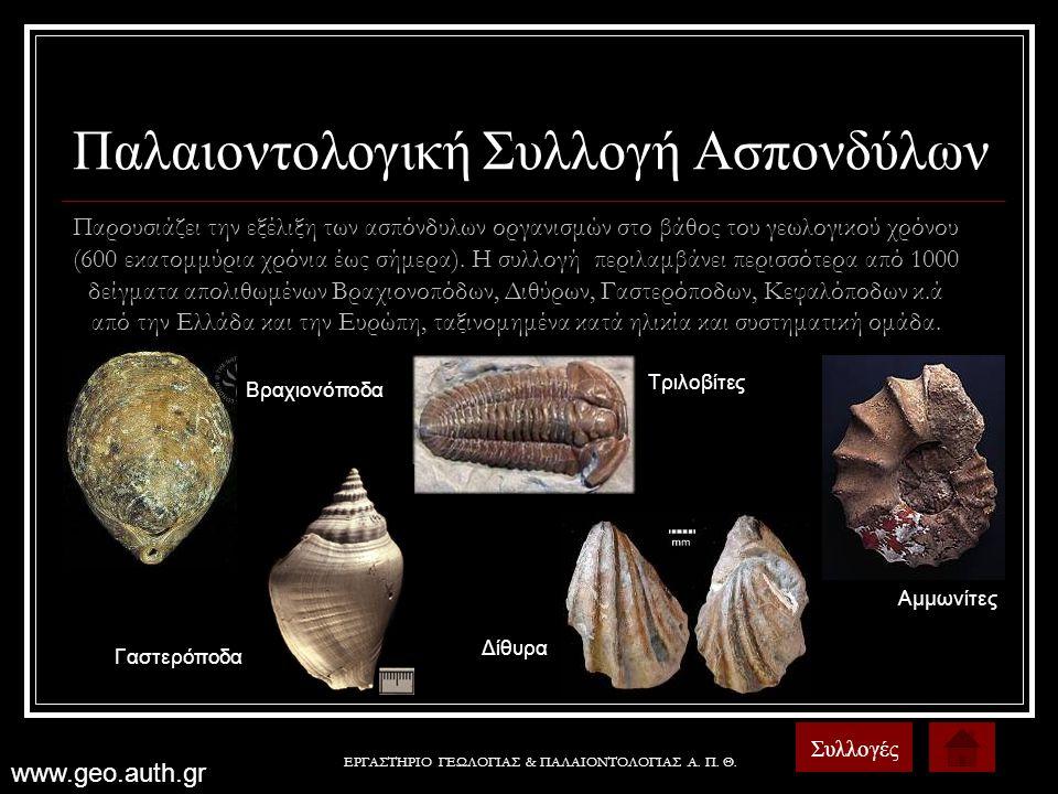 ΕΡΓΑΣΤΗΡΙΟ ΓΕΩΛΟΓΙΑΣ & ΠΑΛΑΙΟΝΤΟΛΟΓΙΑΣ Α. Π. Θ. Παλαιοντολογική Συλλογή Ασπονδύλων Συλλογές Παρουσιάζει την εξέλιξη των ασπόνδυλων οργανισμών στο βάθο