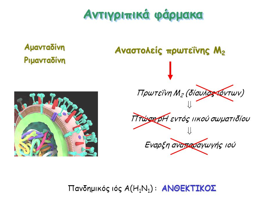 Αναστολείς πρωτεΐνης Μ 2 Πρωτεΐνη Μ 2 (δίαυλος ιόντων)  Πτώση pH εντός ιικού σωματιδίου  Εναρξη αναπαραγωγής ιού ΑμανταδίνηΡιμανταδίνη ΑΝΘΕΚΤΙΚΟΣ Πανδημικός ιός Α(Η 1 Ν 1 ) : ΑΝΘΕΚΤΙΚΟΣ Αντιγριπικά φάρμακα