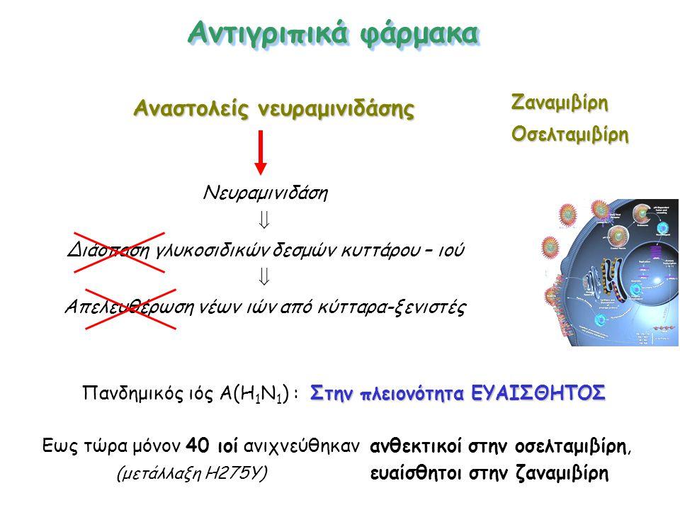 Αναστολείς νευραμινιδάσης Αντιγριπικά φάρμακα Νευραμινιδάση  Διάσπαση γλυκοσιδικών δεσμών κυττάρου – ιού  Απελευθέρωση νέων ιών από κύτταρα-ξενιστές ΖαναμιβίρηΟσελταμιβίρη Στην πλειονότητα ΕΥΑΙΣΘΗΤΟΣ Πανδημικός ιός Α(Η 1 Ν 1 ) : Στην πλειονότητα ΕΥΑΙΣΘΗΤΟΣ Εως τώρα μόνον 40 ιοί ανιχνεύθηκαν ανθεκτικοί στην οσελταμιβίρη, (μετάλλαξη Η275Υ) ευαίσθητοι στην ζαναμιβίρη