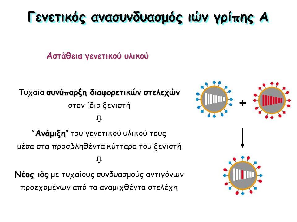 συνύπαρξη διαφορετικών στελεχών Τυχαία συνύπαρξη διαφορετικών στελεχών στον ίδιο ξενιστή  Ανάμιξη Ανάμιξη του γενετικού υλικού τους μέσα στα προσβληθέντα κύτταρα του ξενιστή  Νέος ιός Νέος ιός με τυχαίους συνδυασμούς αντιγόνων προεχομένων από τα αναμιχθέντα στελέχη Γενετικός ανασυνδυασμός ιών γρίπης Α Αστάθεια γενετικού υλικού +