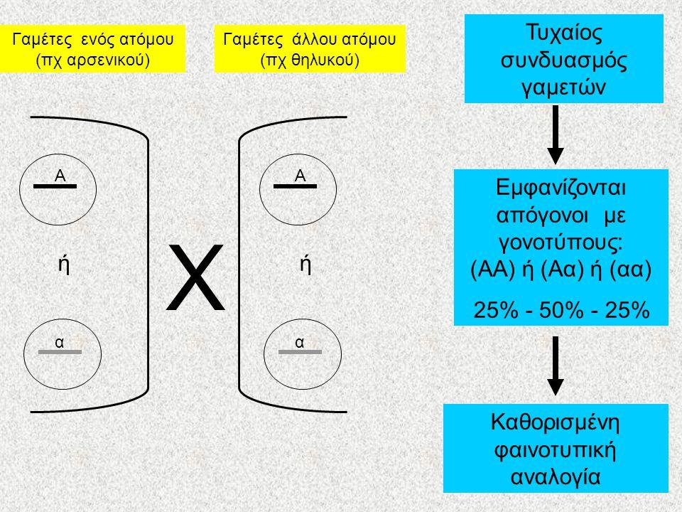 Α α Α α Γαμέτες ενός ατόμου (πχ αρσενικού) Γαμέτες άλλου ατόμου (πχ θηλυκού) Χ Τυχαίος συνδυασμός γαμετών Εμφανίζονται απόγονοι με γονοτύπους: (ΑΑ) ή (Αα) ή (αα) 25% - 50% - 25% Καθορισμένη φαινοτυπική αναλογία ήή