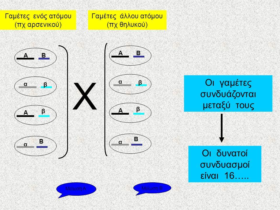 Γαμέτες ενός ατόμου (πχ αρσενικού) Γαμέτες άλλου ατόμου (πχ θηλυκού) ΑΒ α β Α β α Β ΑΒ α β Α β α Β Χ Οι γαμέτες συνδυάζονται μεταξύ τους Οι δυνατοί συνδυασμοί είναι 16…..