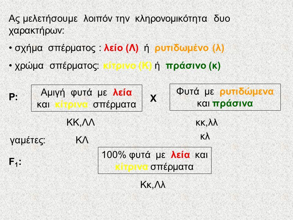 Ας μελετήσουμε λοιπόν την κληρονομικότητα δυο χαρακτήρων: σχήμα σπέρματος : λείο (Λ) ή ρυτιδωμένο (λ) χρώμα σπέρματος: κίτρινο (Κ) ή πράσινο (κ) Αμιγή φυτά με λεία και κίτρινα σπέρματα Φυτά με ρυτιδώμενα και πράσινα P:P: X 100% φυτά με λεία και κίτρινα σπέρματα F1:F1: ΚΚ,ΛΛκκ,λλ γαμέτες:ΚΛ κλ Κκ,Λλ