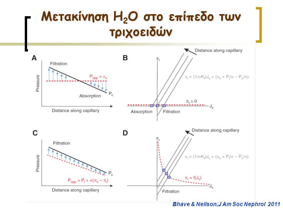 Μετακίνηση H 2 O στο επίπεδο των τριχοειδών Bhave & Neilson,J Am Soc Nephrol 2011
