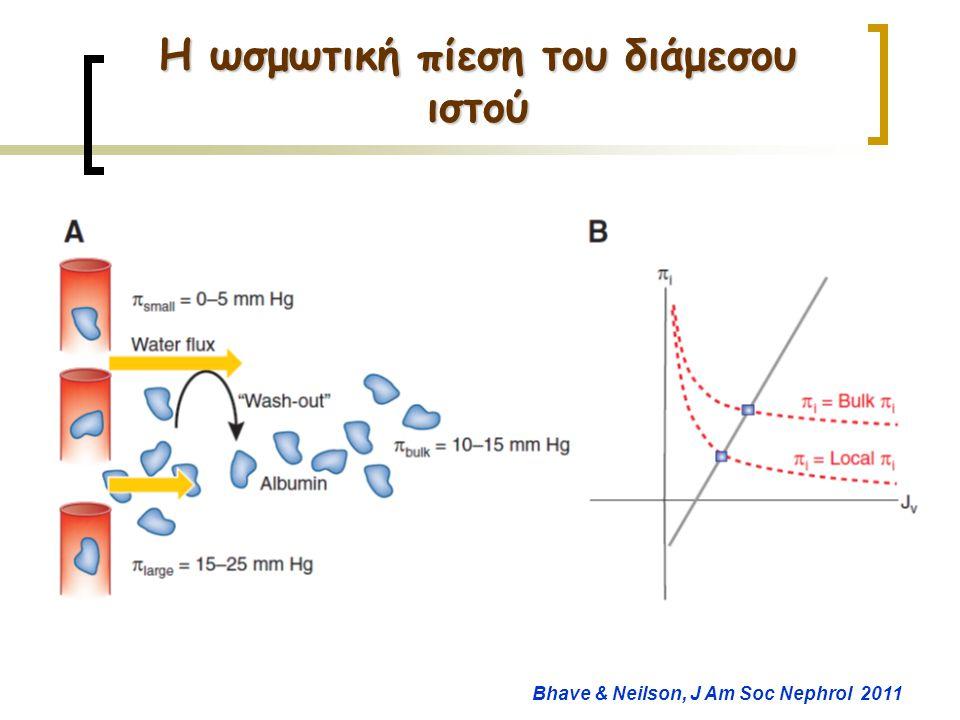Η ωσμωτική πίεση του διάμεσου ιστού Bhave & Neilson, J Am Soc Nephrol 2011