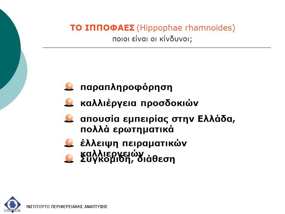 ΤΟ ΙΠΠΟΦΑΕΣ (Hippophae rhamnoides) απουσία εμπειρίας στην Ελλάδα, πολλά ερωτηματικά έλλειψη πειραματικών καλλιεργειών παραπληροφόρηση ΙΝΣΤΙΤΟΥΤΟ ΠΕΡΙΦΕΡΕΙΑΚΗΣ ΑΝΑΠΤΥΞΗΣ ποιοι είναι οι κίνδυνοι; Συγκομιδή, διάθεση καλλιέργεια προσδοκιών