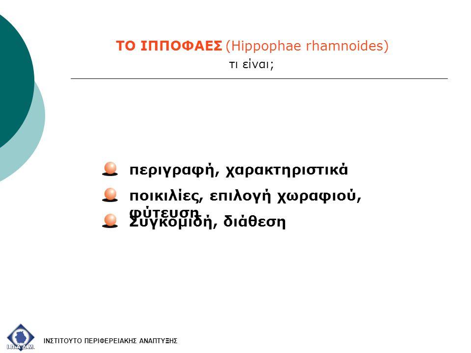 ΤΟ ΙΠΠΟΦΑΕΣ (Hippophae rhamnoides) ποικιλίες, επιλογή χωραφιού, φύτευση Συγκομιδή, διάθεση περιγραφή, χαρακτηριστικά ΙΝΣΤΙΤΟΥΤΟ ΠΕΡΙΦΕΡΕΙΑΚΗΣ ΑΝΑΠΤΥΞΗ