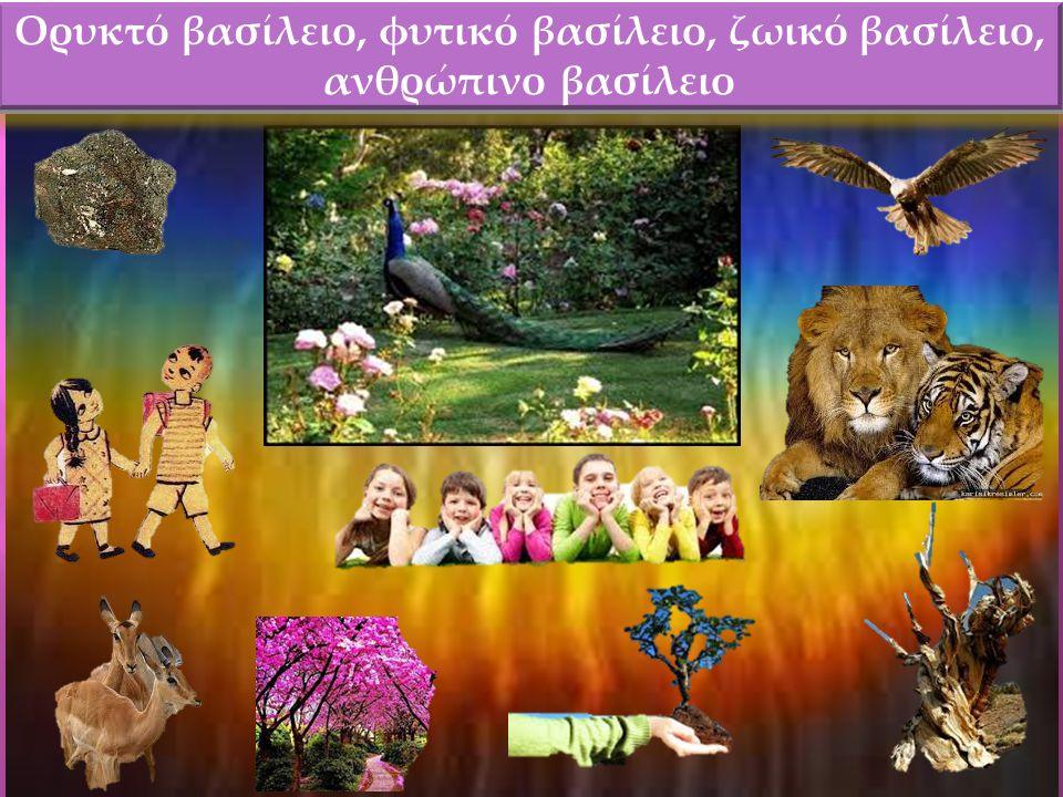 Ορυκτό βασίλειο, φυτικό βασίλειο, ζωικό βασίλειο, ανθρώπινο βασίλειο