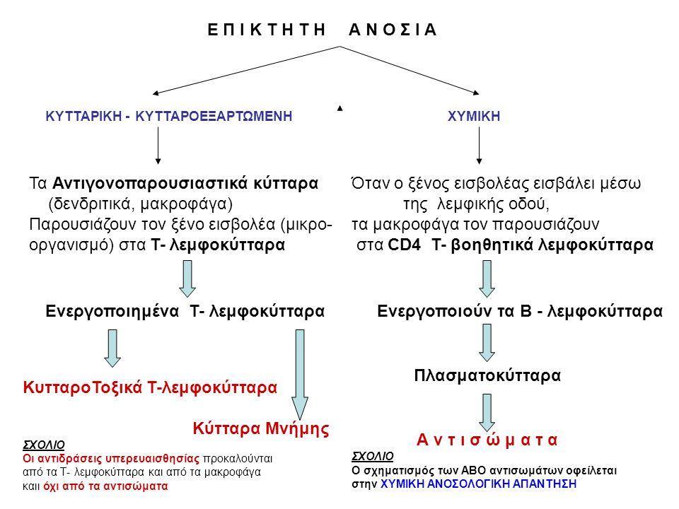 Ε Π Ι Κ Τ Η Τ Η Α Ν Ο Σ Ι Α ΚΥΤΤΑΡΙΚΗ - ΚΥΤΤΑΡΟΕΞΑΡΤΩΜΕΝΗ ΧΥΜΙΚΗ Τα Αντιγονοπαρουσιαστικά κύτταρα (δενδριτικά, μακροφάγα) Παρουσιάζουν τον ξένο εισβολέα (μικρο- οργανισμό) στα Τ- λεμφοκύτταρα Ενεργοποιημένα Τ- λεμφοκύτταρα ΚυτταροΤοξικά Τ-λεμφοκύτταρα Κύτταρα Μνήμης ΣΧΟΛΙΟ Οι αντιδράσεις υπερευαισθησίας προκαλούνται από τα Τ- λεμφοκύτταρα και από τα μακροφάγα καιι όχι από τα αντισώματα Όταν ο ξένος εισβολέας εισβάλει μέσω της λεμφικής οδού, τα μακροφάγα τον παρουσιάζουν στα CD4 T- βοηθητικά λεμφοκύτταρα Ενεργοποιούν τα Β - λεμφοκύτταρα Πλασματοκύτταρα Α ν τ ι σ ώ μ α τ α ΣΧΟΛΙΟ Ο σχηματισμός των ΑΒΟ αντισωμάτων οφείλεται στην ΧΥΜΙΚΗ ΑΝΟΣΟΛΟΓΙΚΗ ΑΠΑΝΤΗΣΗ