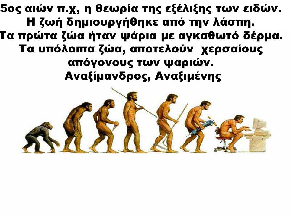 5ος αιών π.χ, η θεωρία της εξέλιξης των ειδών. Η ζωή δημιουργήθηκε από την λάσπη. Τα πρώτα ζώα ήταν ψάρια με αγκαθωτό δέρμα. Τα υπόλοιπα ζώα, αποτελού