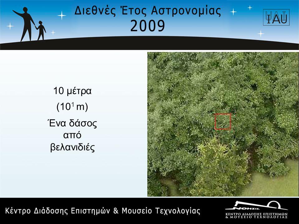 10 μέτρα (10 1 m) Ένα δάσος από βελανιδιές