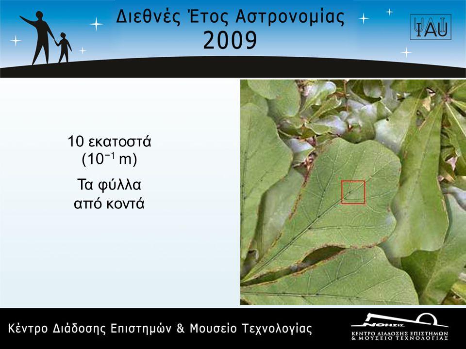 10 εκατοστά (10 −1 m) Τα φύλλα από κοντά