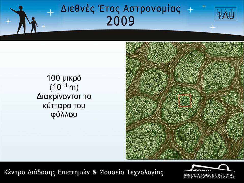 100 μικρά (10 −4 m) Διακρίνονται τα κύτταρα του φύλλου