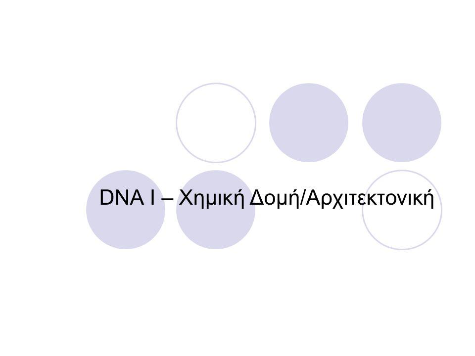 DNA I – Χημική Δομή/Αρχιτεκτονική