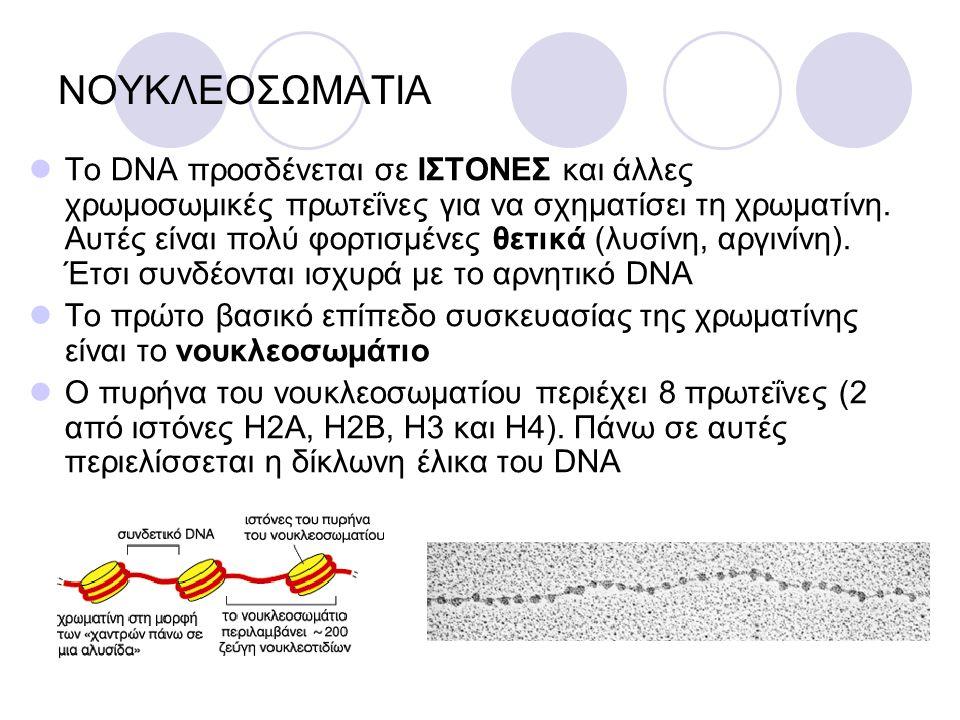 ΝΟΥΚΛΕΟΣΩΜΑΤΙΑ Το DNA προσδένεται σε ΙΣΤΟΝΕΣ και άλλες χρωμοσωμικές πρωτεΐνες για να σχηματίσει τη χρωματίνη. Αυτές είναι πολύ φορτισμένες θετικά (λυσ