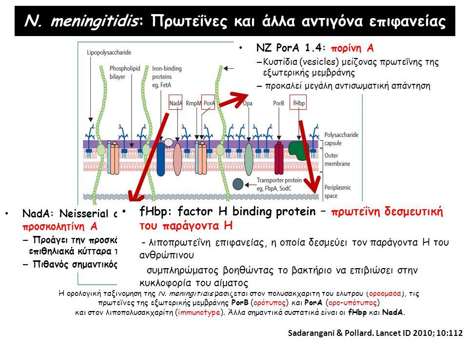 N. meningitidis: Πρωτεΐνες και άλλα αντιγόνα επιφανείας Η ορολογική ταξινόμηση της N. meningitidis βασίζεται στον πολυσακχαρίτη του ελύτρου (οροομάδα)