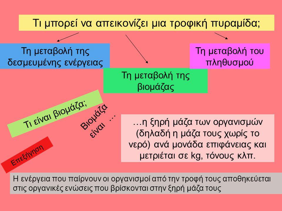 Τι μπορεί να απεικονίζει μια τροφική πυραμίδα; Τη μεταβολή της δεσμευμένης ενέργειας Τη μεταβολή της βιομάζας Τη μεταβολή του πληθυσμού Τι είναι βιομάζα; …η ξηρή μάζα των οργανισμών (δηλαδή η μάζα τους χωρίς το νερό) ανά μονάδα επιφάνειας και μετριέται σε kg, τόνους κλπ.