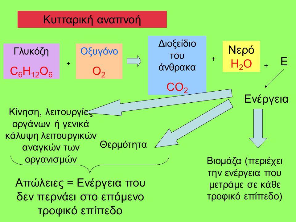 Κυτταρική αναπνοή Διοξείδιο του άνθρακα CO 2 Νερό H 2 O Γλυκόζη C 6 H 12 O 6 Οξυγόνο Ο 2 + + Ε + Ενέργεια Κίνηση, λειτουργίες οργάνων ή γενικά κάλυψη λειτουργικών αναγκών των οργανισμών Θερμότητα Βιομάζα (περιέχει την ενέργεια που μετράμε σε κάθε τροφικό επίπεδο) Απώλειες = Ενέργεια που δεν περνάει στο επόμενο τροφικό επίπεδο