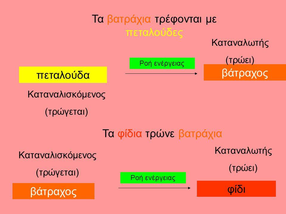 Τα βατράχια τρέφονται με πεταλούδες πεταλούδα Καταναλισκόμενος (τρώγεται) βάτραχος Καταναλωτής (τρώει) Ροή ενέργειας Τα φίδια τρώνε βατράχια φίδι βάτραχος Καταναλισκόμενος (τρώγεται) Καταναλωτής (τρώει)