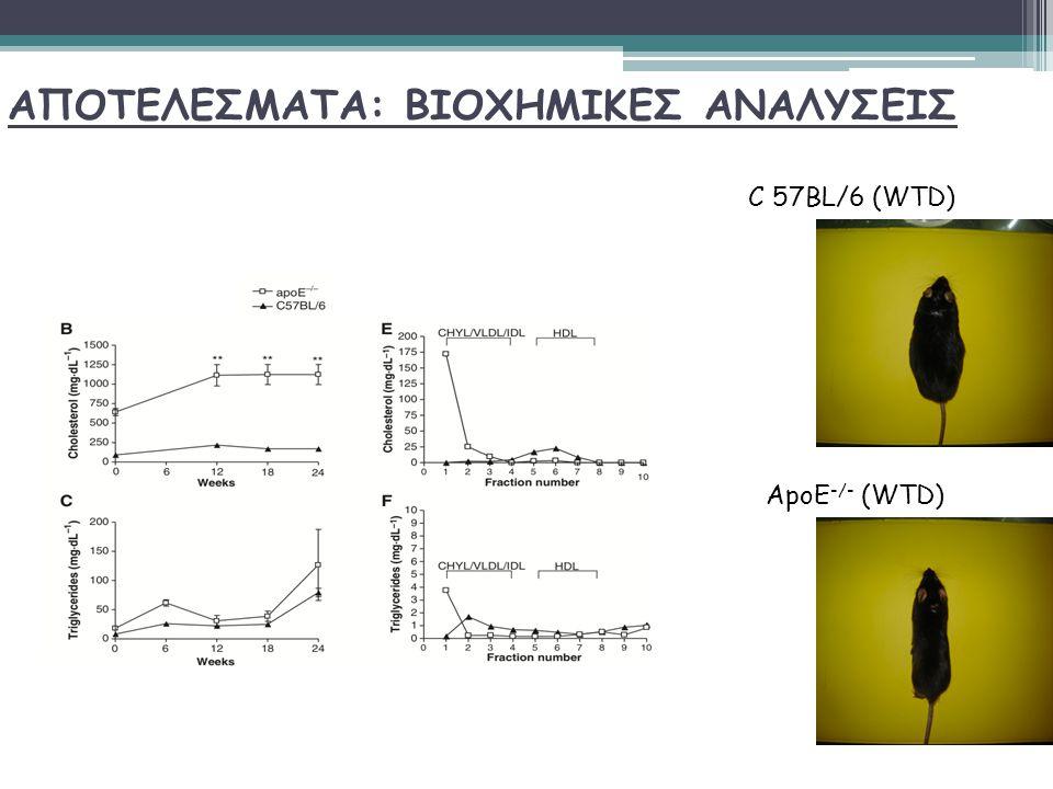ΑΠΟΤΕΛΕΣΜΑΤΑ: ΒΙΟΧΗΜΙΚΕΣ ΑΝΑΛΥΣΕΙΣ C 57BL/6 (WTD) ApoE -/- (WTD)