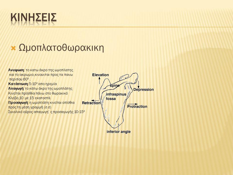  Ωμοπλατοθωρακικη Ανυψωση: το κατω άκρο της ωμοπλατης και το ακρωμιο,κινουνται προς τα πανω περιπου 60 ο. Κατάπτωση:5-10 ο απο ηρεμία Απαγωγή: το κάτ