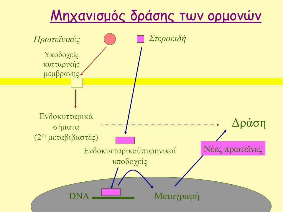 Μηχανισμός δράσης των ορμονών Πρωτεϊνικές Δράση Υποδοχείς κυτταρικής μεμβράνης Ενδοκυτταρικά σήματα (2 οι μεταβιβαστές) Στεροειδή Μεταγραφή Νέες πρωτεϊνες Ενδοκυτταρικοί/πυρηνικοί υποδοχείς DNA