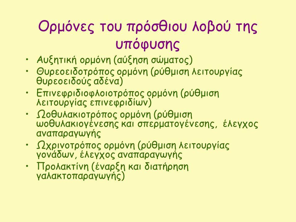 Ορμόνες του πρόσθιου λοβού της υπόφυσης Αυξητική ορμόνη (αύξηση σώματος) Θυρεοειδοτρόπος ορμόνη (ρύθμιση λειτουργίας θυρεοειδούς αδένα) Επινεφριδιοφλοιοτρόπος ορμόνη (ρύθμιση λειτουργίας επινεφριδίων) Ωοθυλακιοτρόπος ορμόνη (ρύθμιση ωοθυλακιογένεσης και σπερματογένεσης, έλεγχος αναπαραγωγής Ωχρινοτρόπος ορμόνη (ρύθμιση λειτουργίας γονάδων, έλεγχος αναπαραγωγής Προλακτίνη (έναρξη και διατήρηση γαλακτοπαραγωγής)