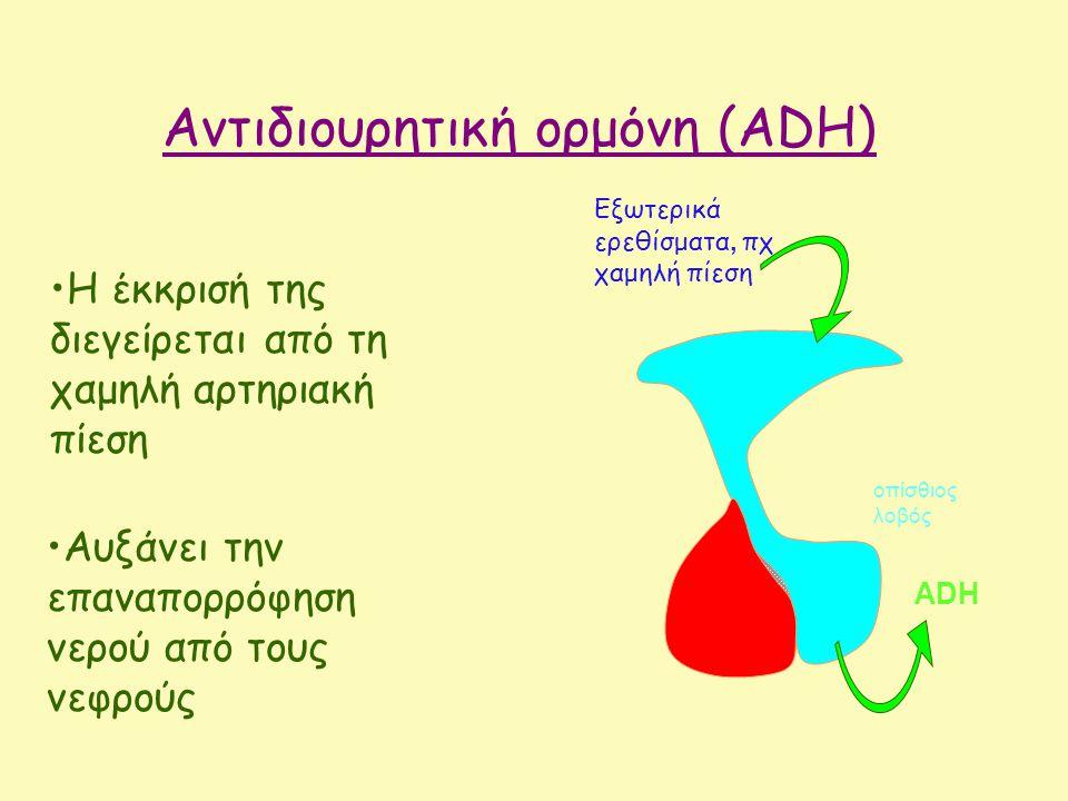 Αυξάνει την επαναπορρόφηση νερού από τους νεφρούς Αντιδιουρητική ορμόνη (ADH) ADH Εξωτερικά ερεθίσματα, πχ χαμηλή πίεση οπίσθιος λοβός Η έκκρισή της διεγείρεται από τη χαμηλή αρτηριακή πίεση
