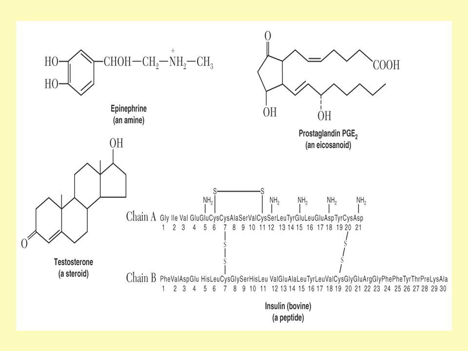 Βιολογικές δράσεις θυρεοειδικών ορμονών Αύξηση του οξειδωτικού μεταβολισμού Ανάπτυξη και διαφοροποίηση (απαραίτητες για την ανάπτυξη και ιδιαίτερα του νευρικού συστήματος, σε συνεργασία και με άλλες ορμόνες, π.χ την αυξητική ορμόνη.