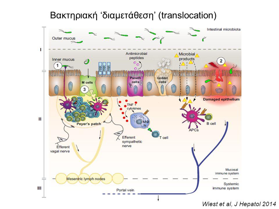 Παθολογική βακτηριακή 'διαμετάθεση' (translocation) στην κίρρωση Αυτόματες λοιμώξεις: SBP, SBE, SB Αυτόματες λοιμώξεις: SBP, SBE, SB GFP-marked E.coli Wiest et al, J Hepatol 2014