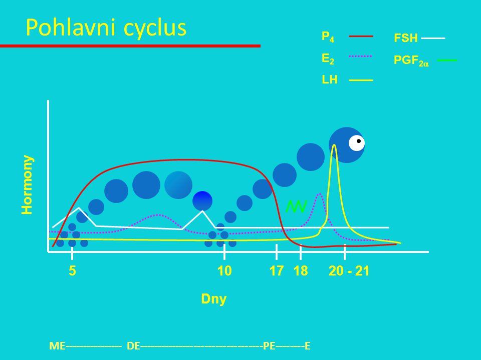 P 4 E 2 LH FSH PGF 2  1817510 Hormony Dny 20 - 21 Pohlavni cyclus ME---------------- DE----------------------------------PE--------E