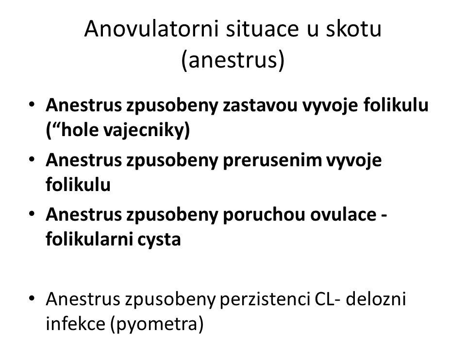 Anovulatorni situace u skotu (anestrus) Anestrus zpusobeny zastavou vyvoje folikulu ( hole vajecniky) Anestrus zpusobeny prerusenim vyvoje folikulu Anestrus zpusobeny poruchou ovulace - folikularni cysta Anestrus zpusobeny perzistenci CL- delozni infekce (pyometra)